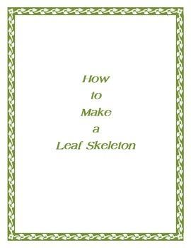 How to make a leaf skeleton
