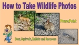How to take Wildlife Photos - Deer, Squirrels, Rabbits and Raccoons