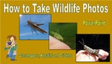 How to take Wildlife Photos - Grasshoppers, Katydids and Crickets