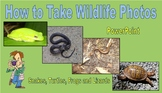 How to take Wildlife Photos - Snakes, Turtles, Frogs and Lizards