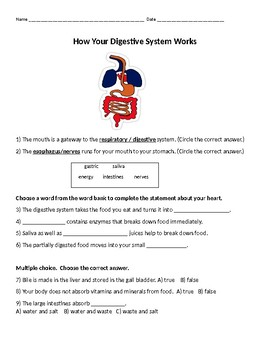 How your Digestive System Works Worksheet by Lameka Smalls | TpT