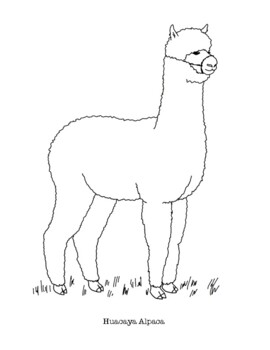 huacaya alpaca coloring page by mama draw it teachers pay teachers huacaya alpaca coloring page by mama