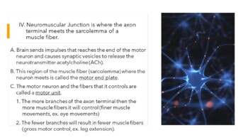 Human A&P Muscle & Sliding Filament Theory Presentation
