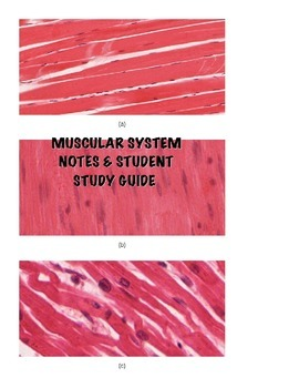 Human A&P Muscular System Lecture notes and Student Study Guide