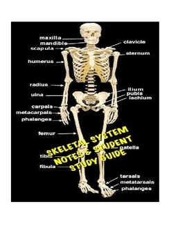 Human A&P Skeletal System Lecture notes and Student Study Guide