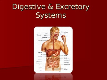 Human Anatomy & Physiology Powerpoint: The Digestive & Excretory Systems