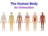 Human Anatomy - An Introduction (Editable)