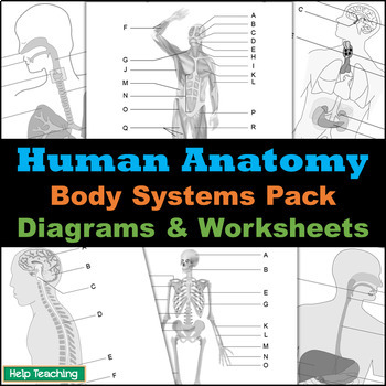 Human Anatomy: Body Systems Diagrams Pack by Help Teaching | TpT
