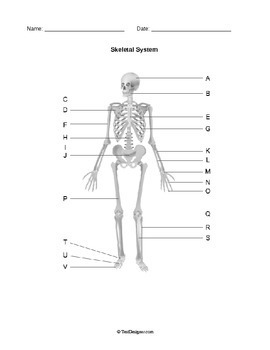 Human Anatomy: Body Systems Diagrams Pack