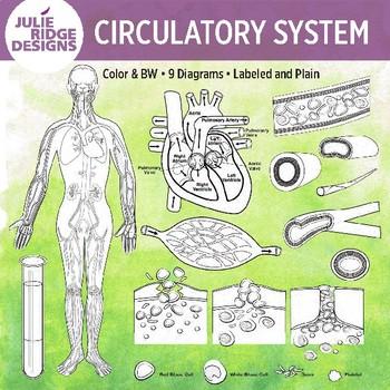 Human Anatomy Clip Art Illustrations Bundle