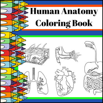 Human Anatomy Coloring Book By Creations LAckert