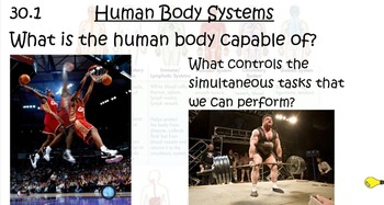 Human Anatomy Introduction and Nervous System