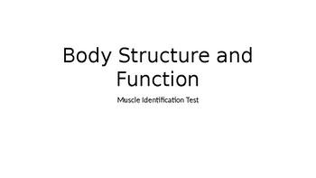Human Anatomy Muscle ID Test