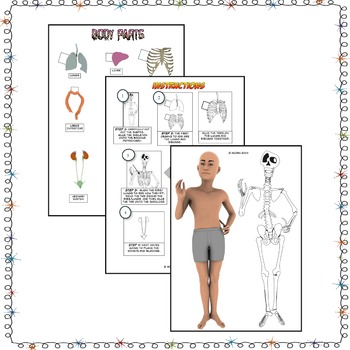 Human Anatomy Paper Model  Virtual Dissection
