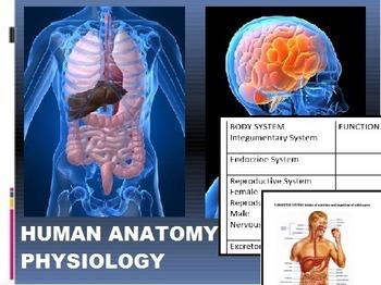 Human Anatomy & Physiology Bundle