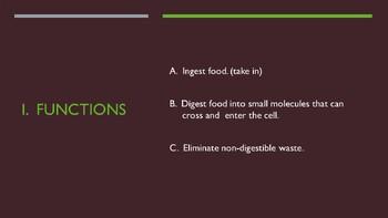 Human Anatomy & Physiology Digestive System Presentation