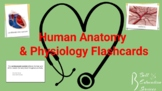 Human Anatomy & Physiology Flashcards: History and Muscle Cells