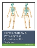 Human Anatomy & Physiology Lab Activity: Overview of the Skeleton