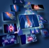 The Skeletal System Lab Bundle:  Unit Plan, Joint Analysis Lab & Lab Quiz Bundle
