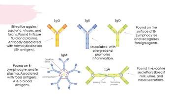 Human Anatomy & Physiology Lymphatic System & Immunity Presentation