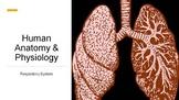 Human Anatomy & Physiology Respiratory System Presentation
