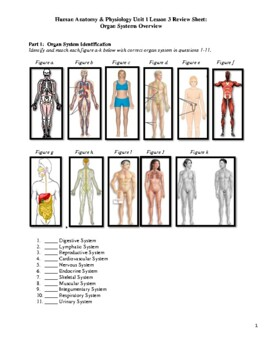 Human Anatomy & Physiology Unit 1 Review Worksheet 3 ...