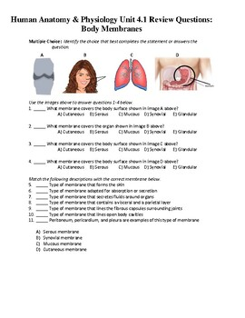 Human Anatomy & Physiology Unit 4.1 Review Worksheet: Body Membranes