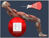 Human Anatomy & Physiology Unit 6 Bundle: The Muscular Sys
