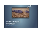 Human Anatomy & Physiology Unit & Daily Lesson Plan 5: The