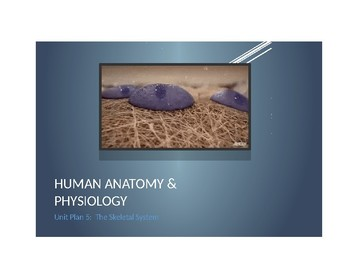 Human Anatomy & Physiology Unit & Daily Lesson Plan 5: The Skeletal System