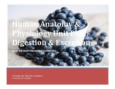 Human Anatomy & Physiology Unit & Daily Lesson Plan: Digestion & Excretion