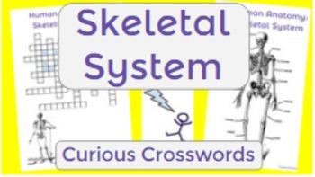 Human Anatomy: Skeletal System- Worksheet