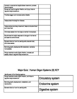 Human Anatomy Vocabulary/Quiz