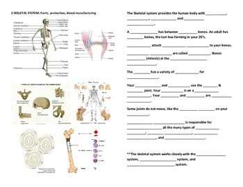 Human Anatomy and Physiology Fill-In-Blanks Worksheets