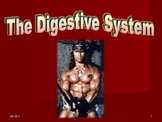 Human Anatomy and Physiology: The Digestive System
