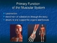 Human Anatomy and Physiology: The Muscular System Powerpoint