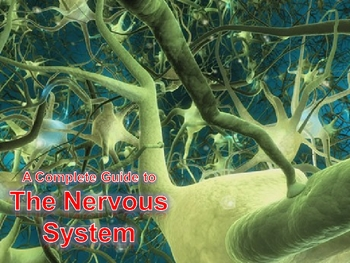 Human Anatomy and Physiology: The Nervous System