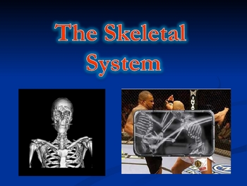 Human Anatomy and Physiology: The Skeletal System