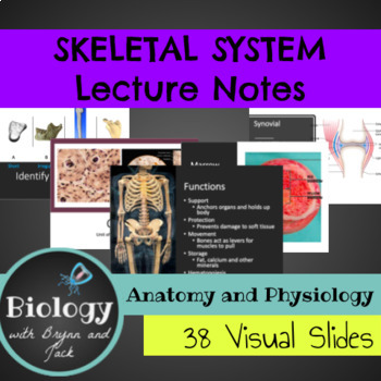 Human Anatomy and Physiology YEAR-LONG Notes Bundle