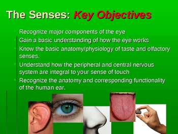 Human Anatomy/Physiology: The 5 Senses