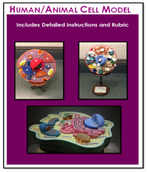 Human/Animal Cell Model (cross-section) - Detailed Instructions, Photos & Rubric