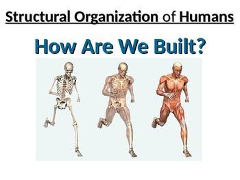 Human Biology: Levels of Organization