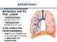 Human Biology: Respiratory System