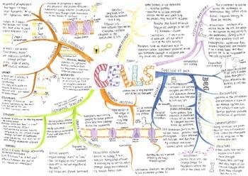 Human Biology and Anatomy Mind Maps