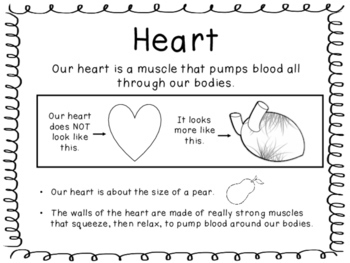 Human Body - Heart- Brain - Lungs - Stomach - Muscles -Experiments