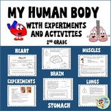 Human Body - Heart- Brain - Lungs - Stomach - Muscles -Experiments 2nd grade