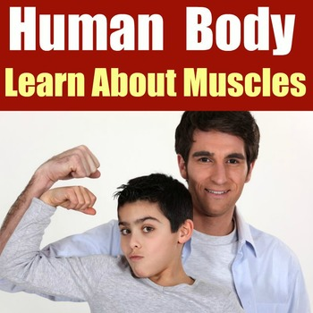 FREE Muscles PowerPoint