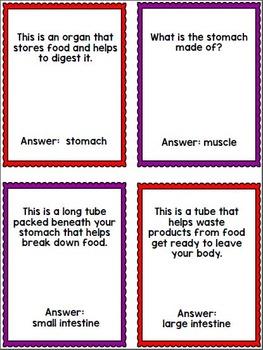 Human Body Organs Review Bingo