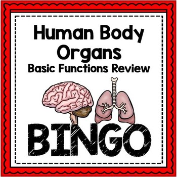 Human Body Organs Review Bingo