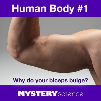 Human Body NGSS:Skeletal&Muscular System ❤ BUNDLE:Activity